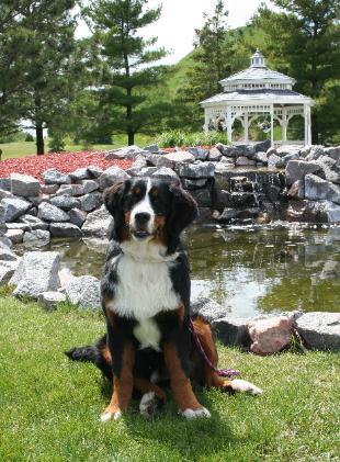 Merrimac Dog Training Club